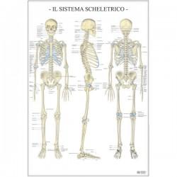 Poster Scientifico Belletti - 67x100 cm - Sistema Scheletrico